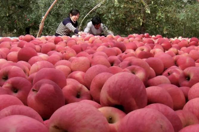 苹果期货.png